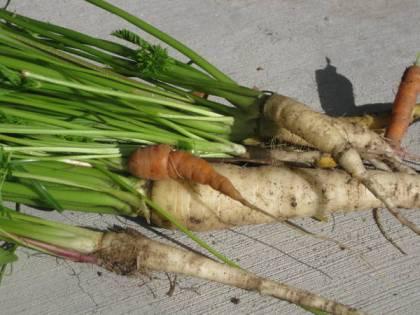 Carrot mix