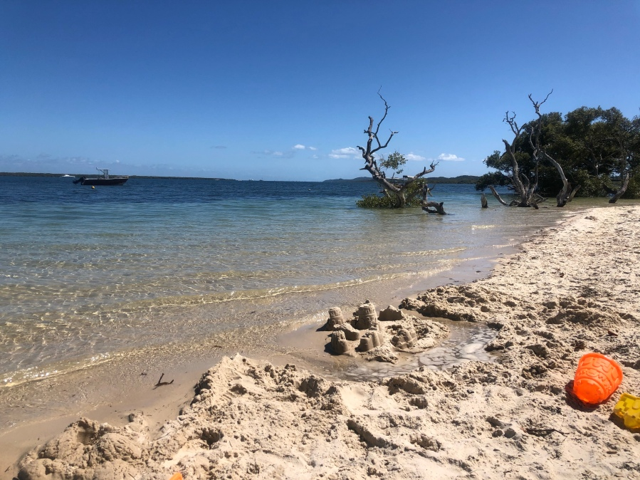 Beach at high tide with clear water and tree in water